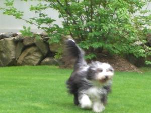 May_20th_puppy_fun_062